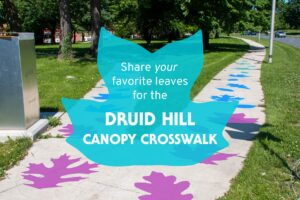 Druid Hill Canopy Crosswalk
